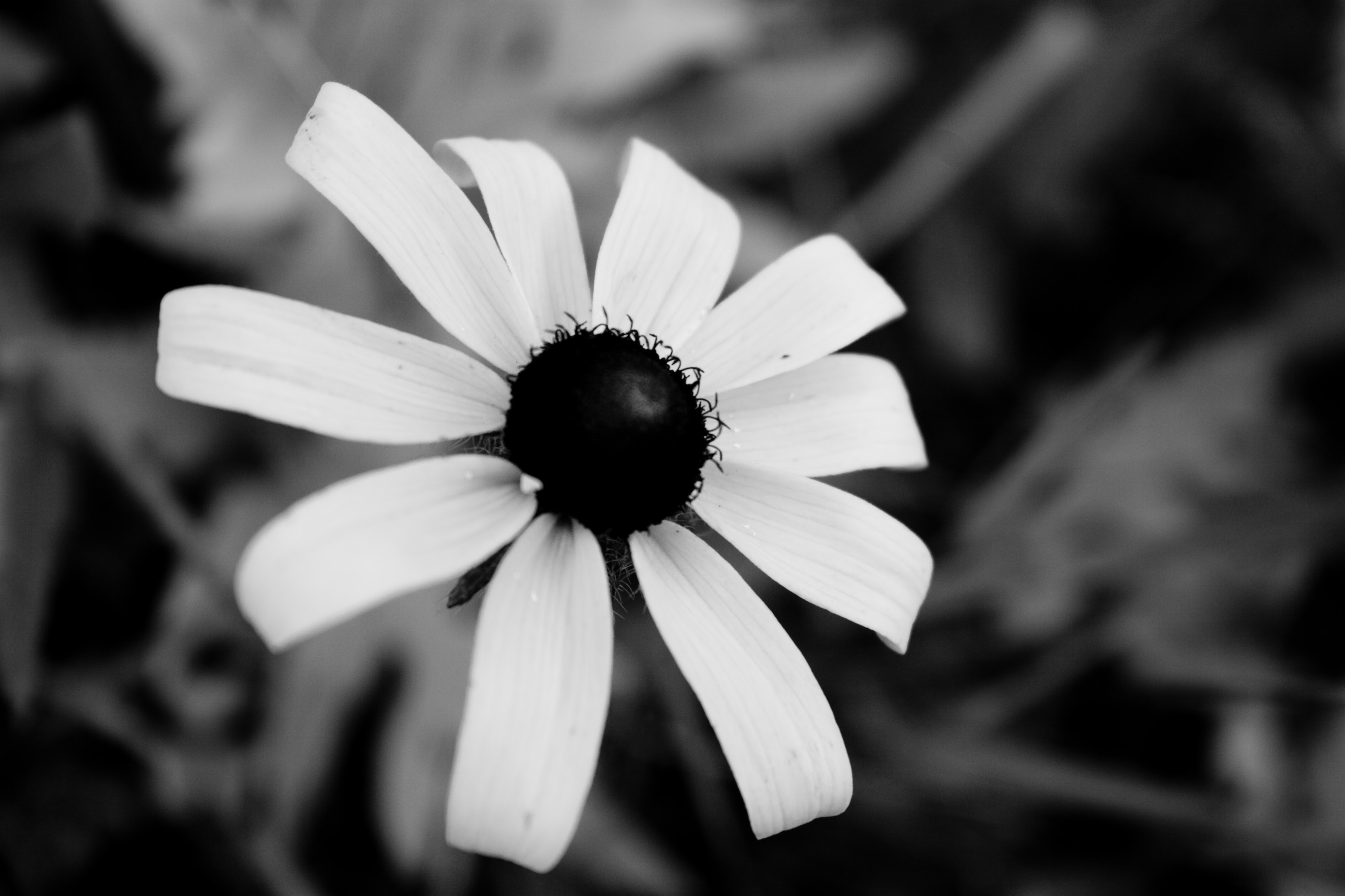 Photography Black And White Flowers Photography Pictures Gallery