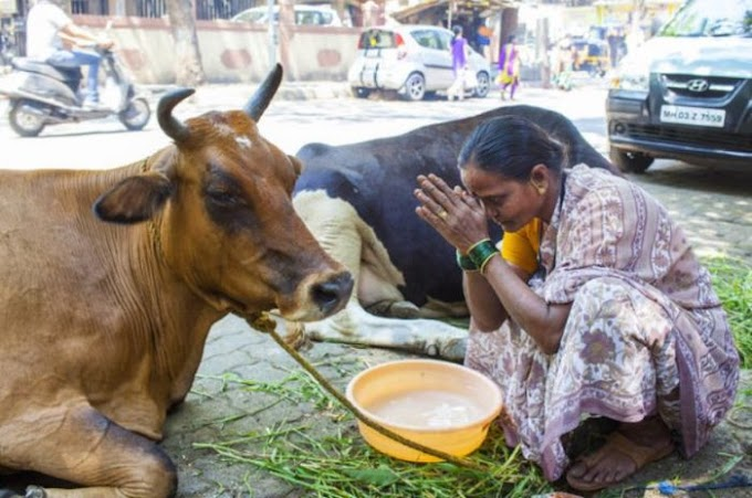 Watch This Unbelievable Video As Cow Prays For People In India