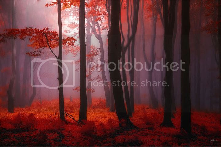 photo Janek-Sedlar-3_zpsb74fad98.jpg