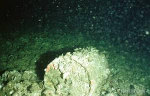Rusting barrels of nuclear waste at Hurd Deep, North Sea