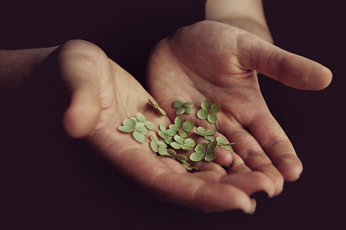 charm, four leaf clover, four leaf clovers, good luck charm, green, lucky - inspiring picture on Favim.com