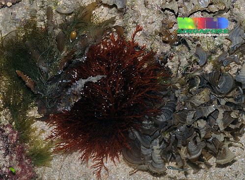 Red, green and brown seaweed