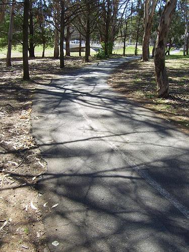 bike path shadows
