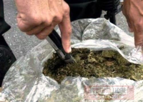Resultado de imagen para 95 libras de marihuana.