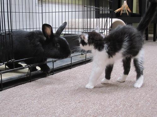 Molly & Cole Meet