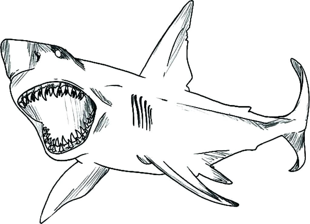 Thresher Shark Coloring Page at GetDrawings | Free download