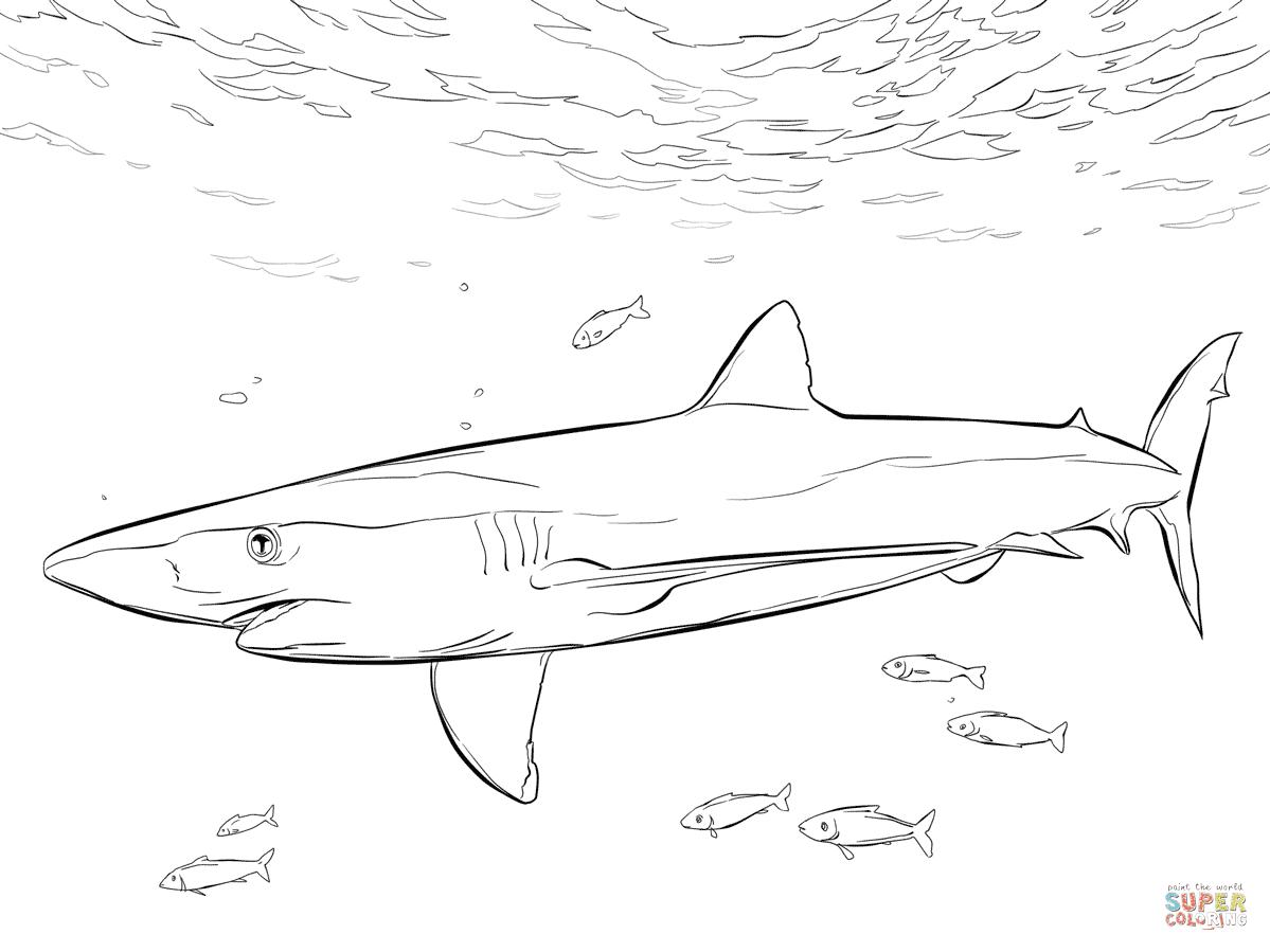 Thresher Shark Drawing at GetDrawings | Free download