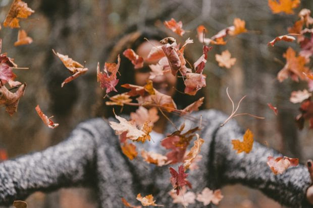 Want to Clean Tons of Leaves in an Instant? Here's How