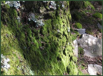 05 moss and stone