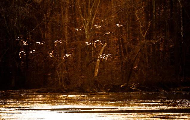 Lake Accotink (01)