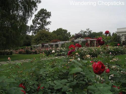 The Huntington Library, Art Collections, and Botanical Gardens (Rose Garden) (Spring) - San Marino 7