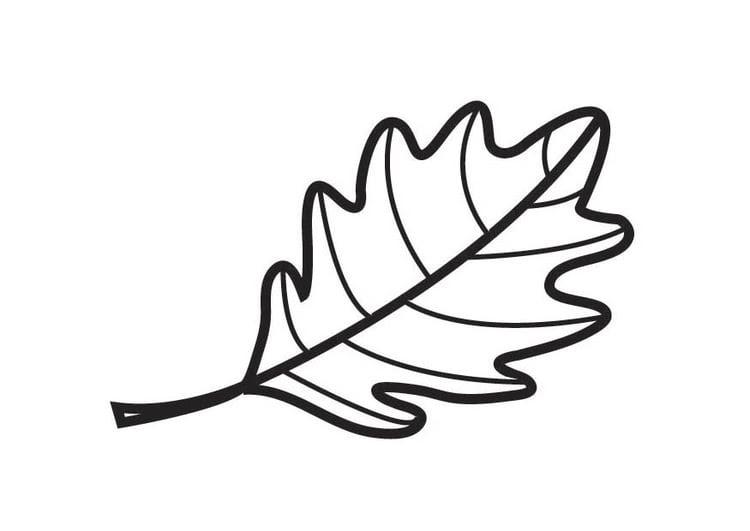 eichenblatt zum ausmalen