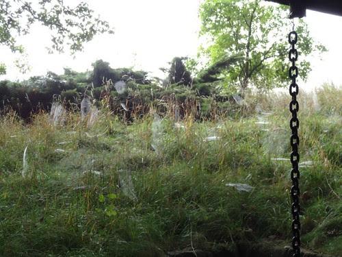 Spinnweben 3