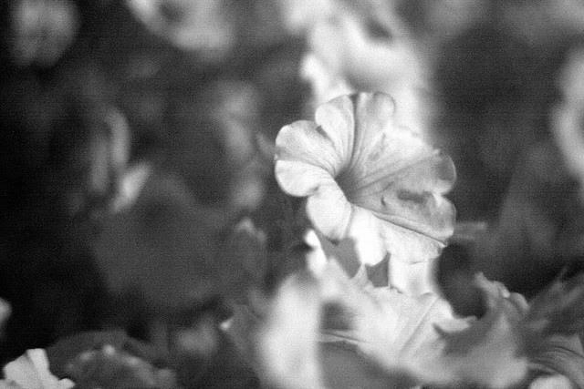 flowers, ultraviolet