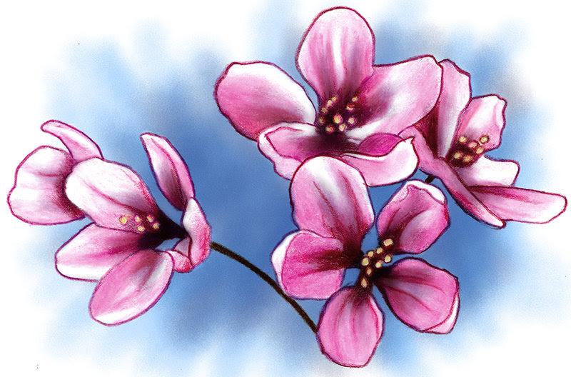 Cherry Blossom Tattoo Images Designs
