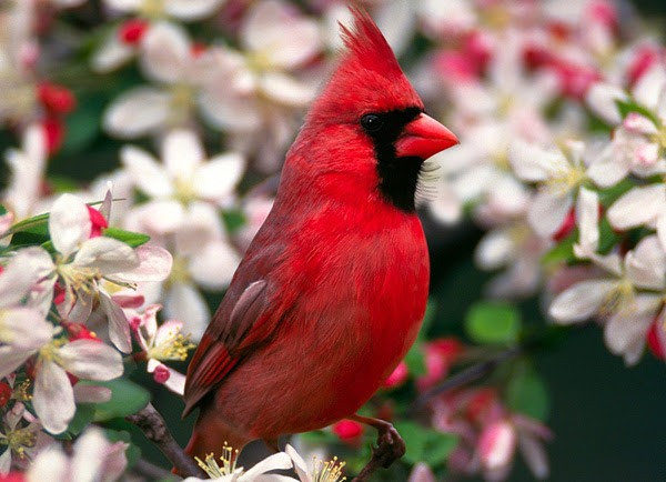 The most beautiful birds of the world
