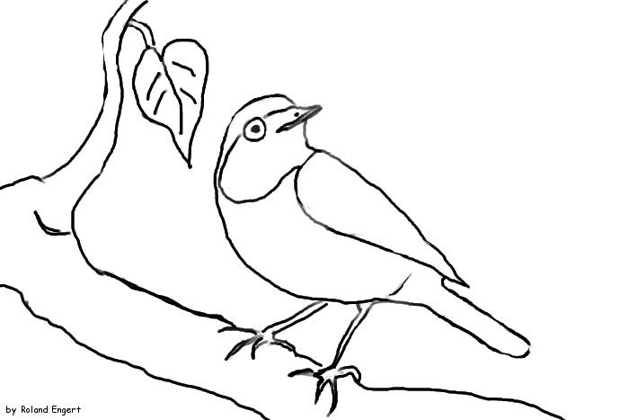 16 unique ausmalbilder winter vögel