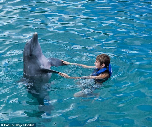 Tales of dolphins befriending humans (stock image) are said to date back as far as AD 77 when Roman naturalist Pliny the Elder recounted a story about a dolphin who formed a bond with a boy who fed him bread. Aristotle even wrote offhandedly about the dolphins' 'passionate attachment to boys'