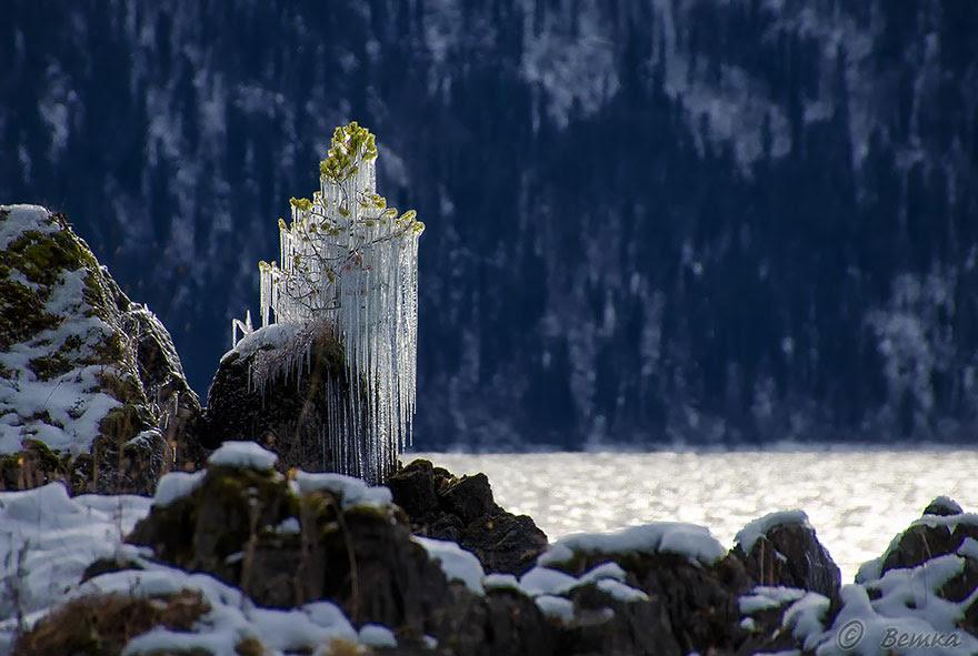 http://www.boredpanda.com/frozen-tree/
