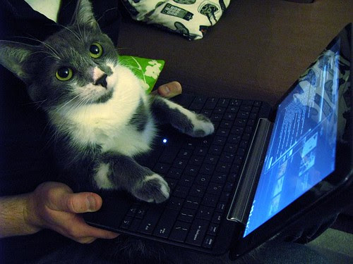Fact: cats like netbooks by rblock.