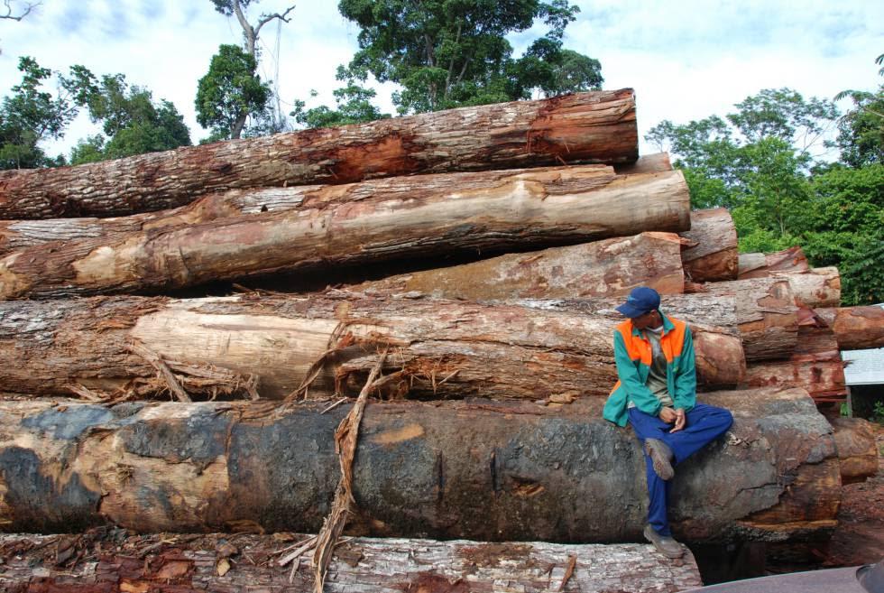 Madera talada en la Amazonia brasileña.