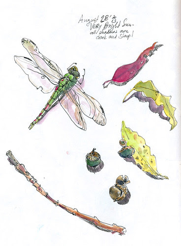 August 2013: Treasured - Dragonfly by apple-pine