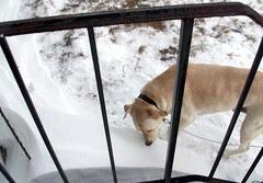 Zeus_snow_122810b