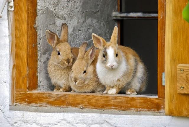 रितेश के तीन खरगोश राजा-Three Rabbit Kings of Ritesh