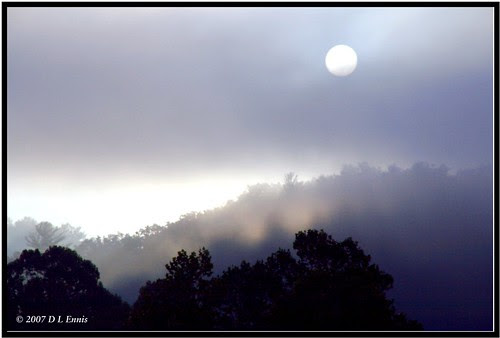 Sun and Fog in the Treetops