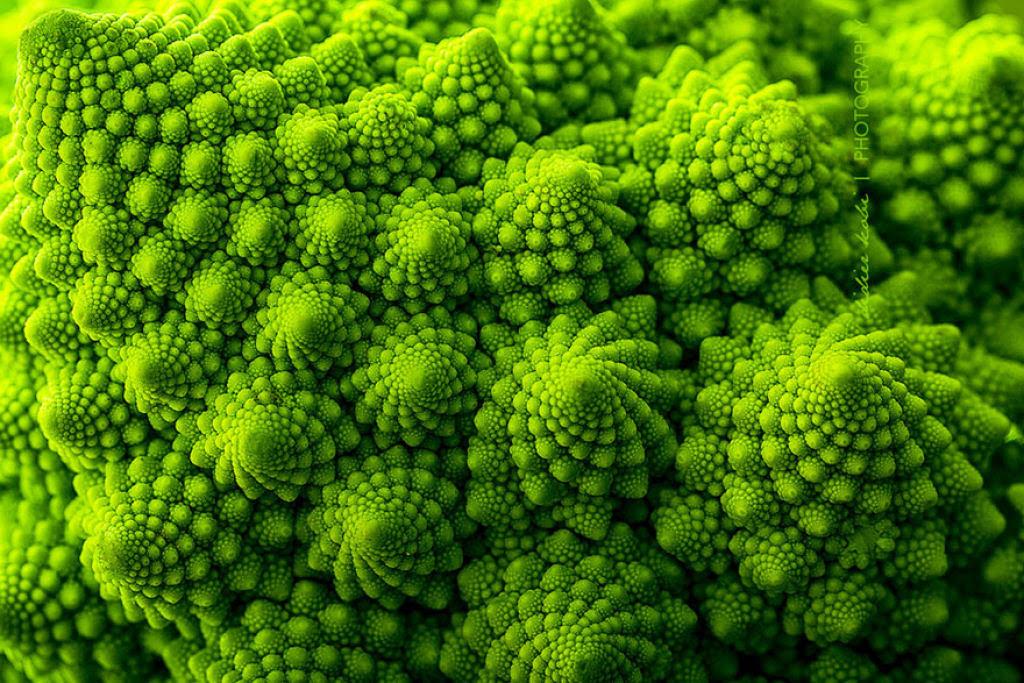 25 Fotografias de plantas para os amantes da matemática 01