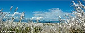Landscape from Assam