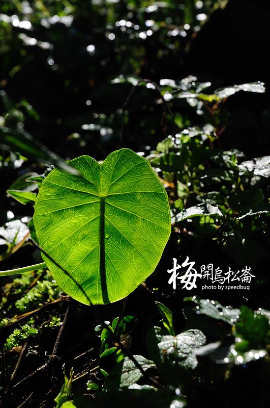 梅開烏松崙  (22).jpg