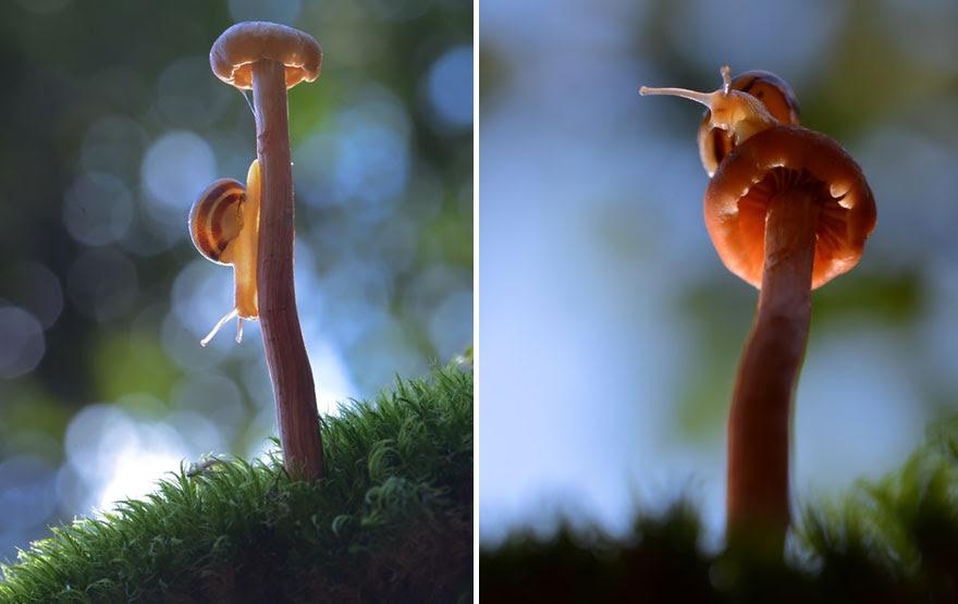 mushroom-photography-vyacheslav-mishchenko-8
