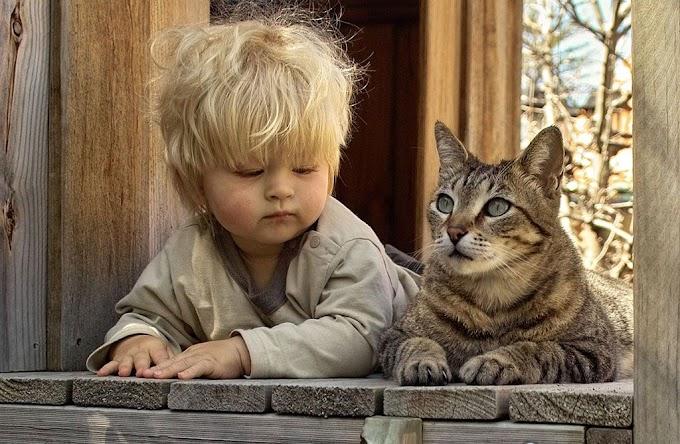 Gatos y niños pequeños, ¿buena compañía?