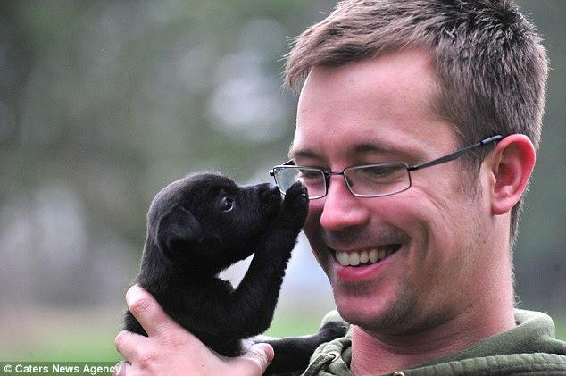 Puppy Love: Marek Cybulski recebe uma pata lúdica de uma das crias resgatada, que foi nomeado Nina