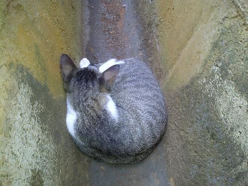 Cat in Drain