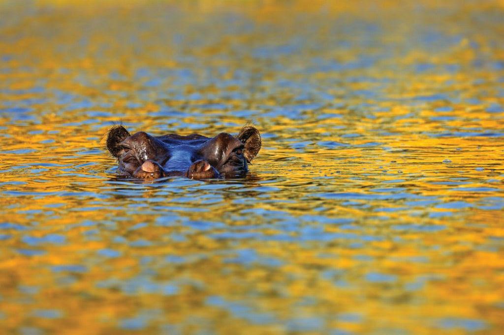 O lado colorido da África selvagem por Alex Bernasconi 15