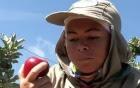 Ceará produz maçã pela 1ª  vez no estado (TV Verdes Mares/Reprodução)