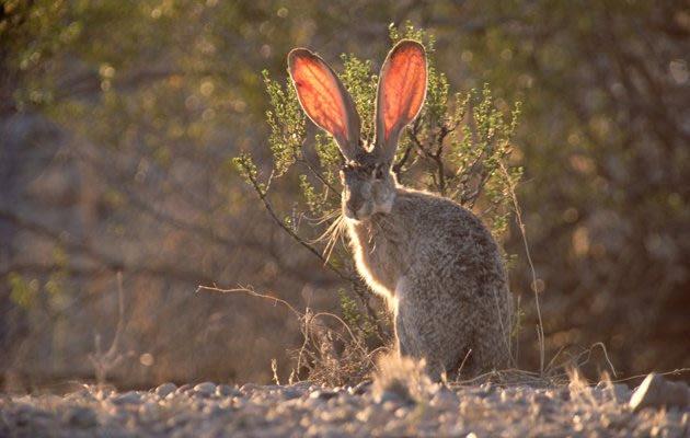 570 Koleksi Gambar Hewan Yang Hidup Di Gurun Pasir Gratis Terbaru