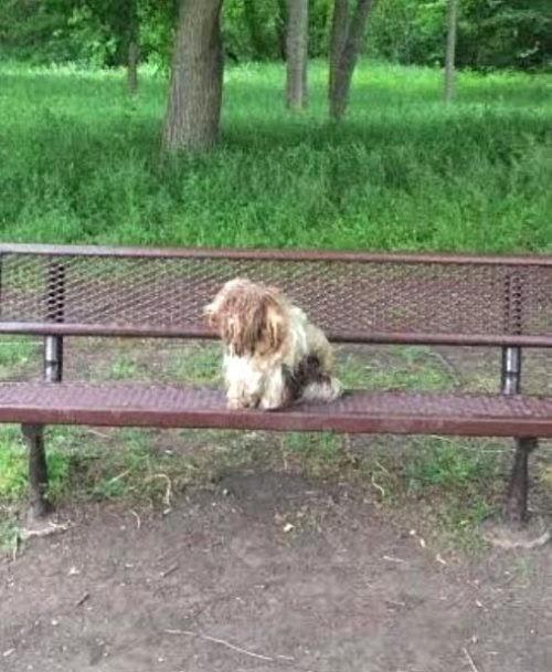Un hombre ve una alfombra vieja en la banca de un parque y al acercarse nota que tiene vida