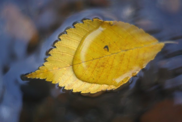 water on leaf on water