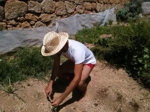 Carlos planting crop