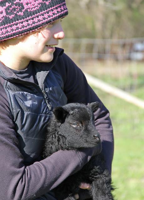 bella and a wee lamb
