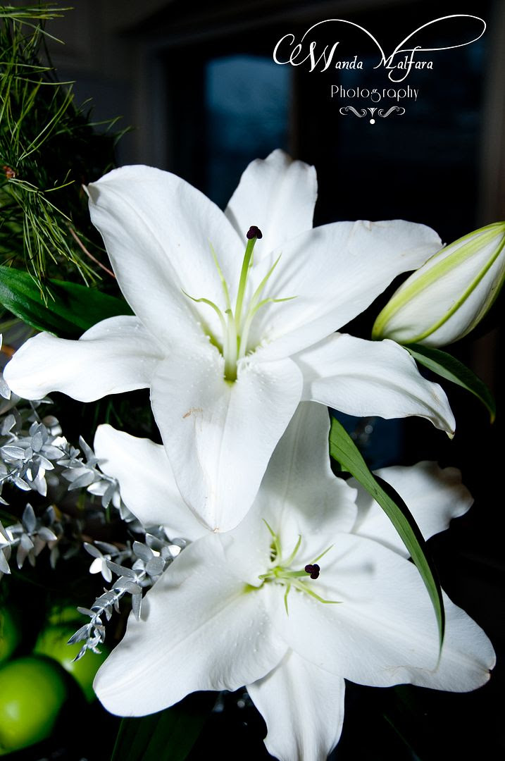 Tues Jan 17, 2012, Beautiful white lilies from my friends flower shop.