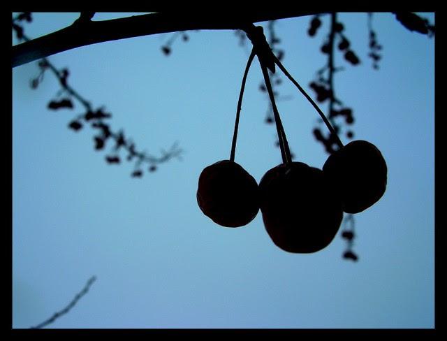 Berries in Winter