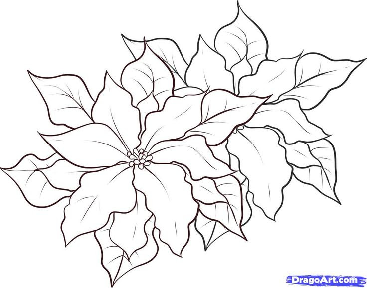 Free Poinsettia Outline Download Free Clip Art Free Clip Art On Clipart Library