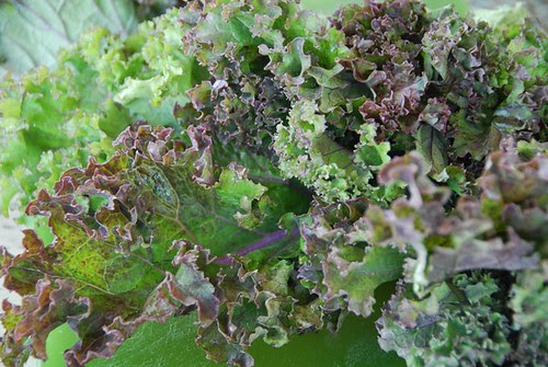 red kale red