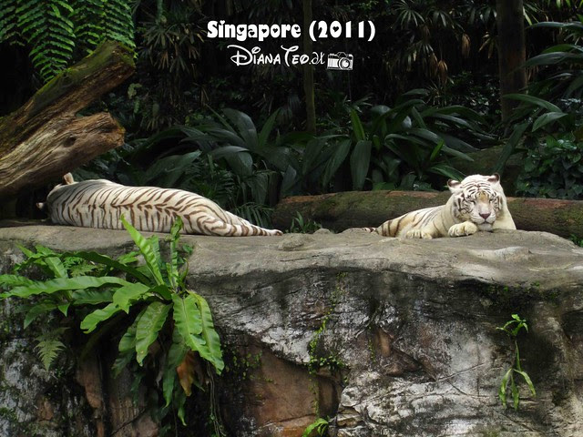 Day 3 Singapore - Zoo Singapore 09