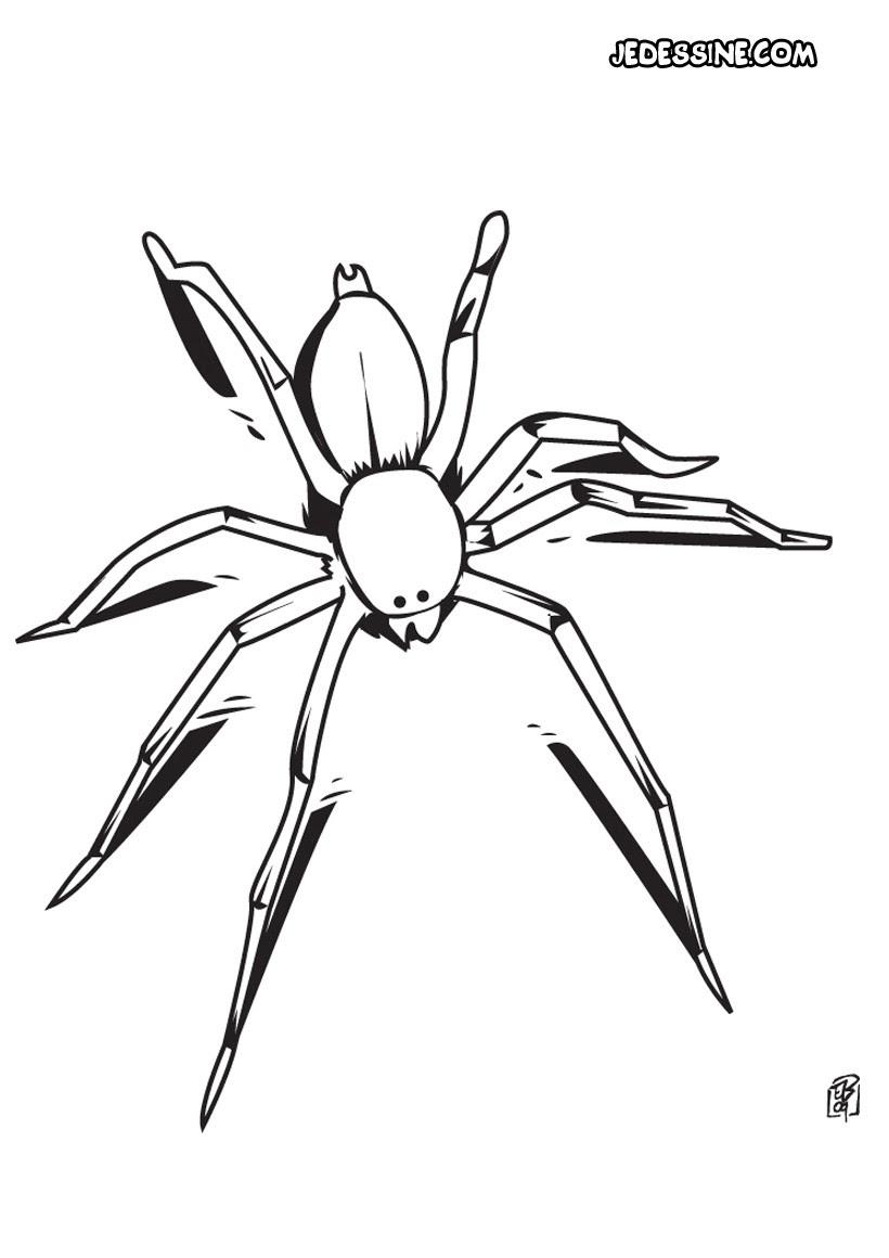 Coloriage d une araignée Coloriage Coloriage ANIMAUX Coloriage INSECTE Coloriage ARAIGNEE