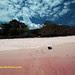 pinkbeach komodo